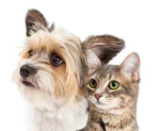 About PetBathtub.com Dog and Cat