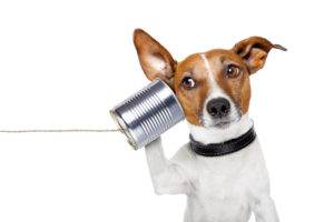 Contact PetBathtub.com Dog Picture